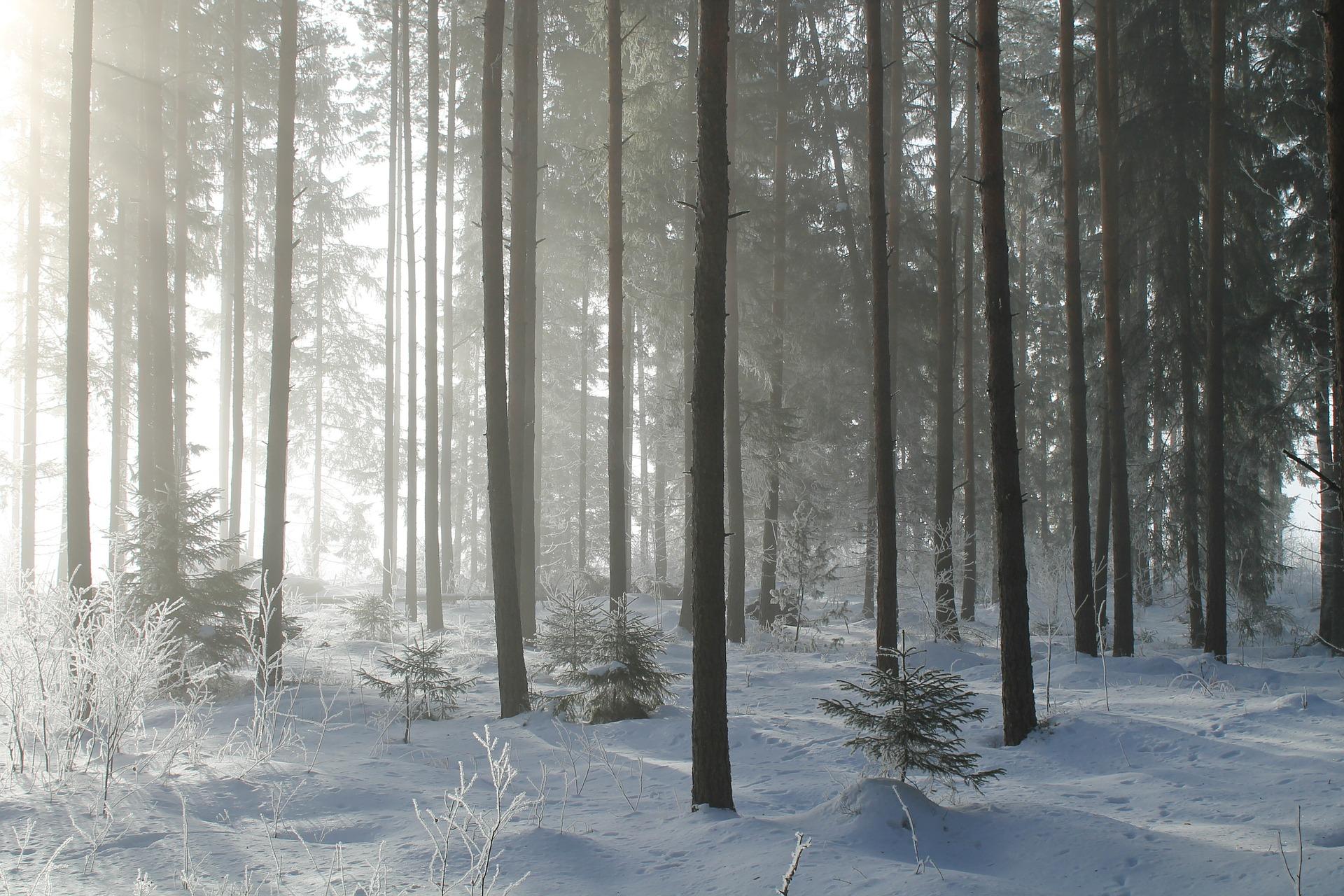 27b74e1f Rekordhögt pris på skogsmark - Skog Supply