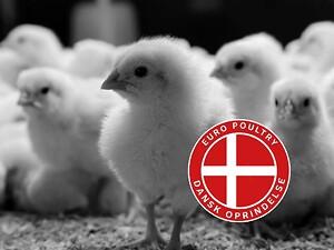 Nyhed: Dansk og fersk kylling hos Euro Poultry, som er opdrættet af dansk kyllingeproducent med høj fokus på velfærd