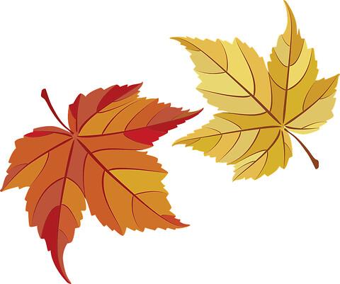 Friske franske kalkuner til Thanksgiving 23. november