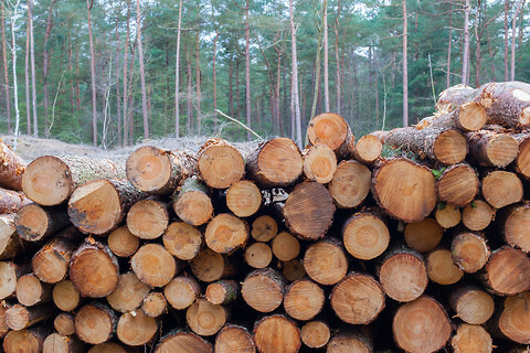 pris på skog