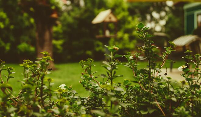 Sådan sikrer du dig en bæredygtig have