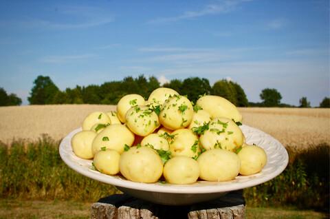Friske kartofler – uden konserveringsmidler fra Olaf Sand & Co. - Friske kartofler – uden konserveringsmidler fra Olaf Sand & Co.