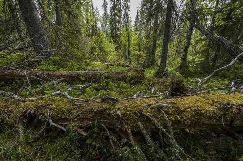 8bef0889 Stora Enso vinner pris - Skog Supply