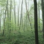 Eftersom skolan mer eller mindre omges av skog åt alla håll, valde man ett vackert foto av en vårskog från en nationalpark i Ardennerna som mall för fasadbilden, som därmed harmoniserar med den naturliga terrängen