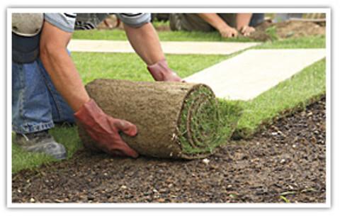 Rullegræs i topkvalitet