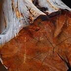 wood-1281725_1920
