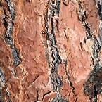 texture-1786845_1920