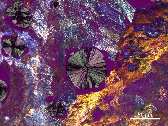 mikroskopikalender 2020, bildeekspert-quiz