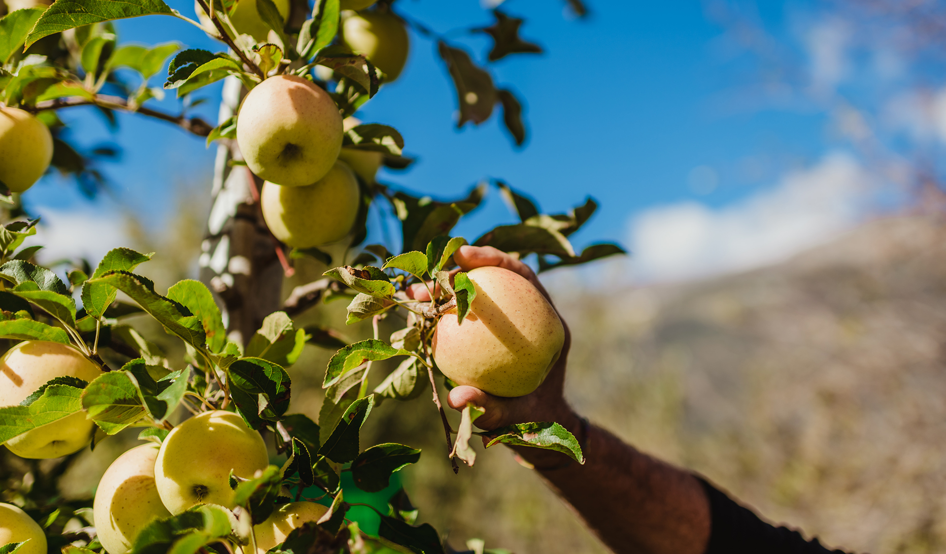 Val Venosta has become one of the leading production areas of organic apples in Europe in terms of both quantity and product quality.