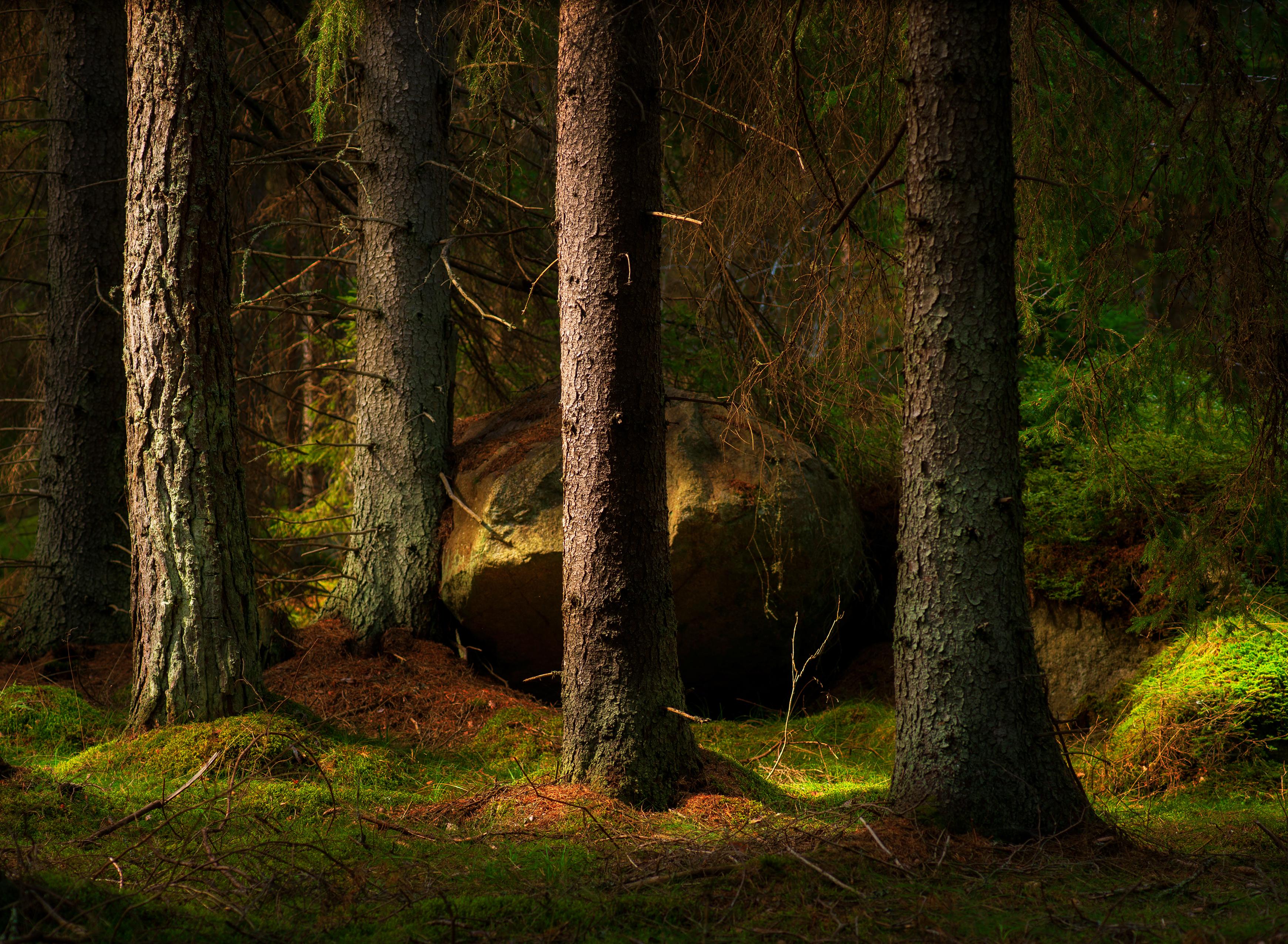 Skogen lyfter holmen