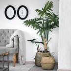 Kunstig opstammet Philodendron i potte. Søgræs kurve