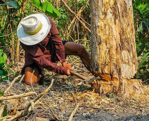 Lever du op til EU's tømmerlov?