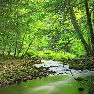 Billede af Skov og vand