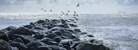 Fremtidens kystbeskyttelse og sikring af kyster 2018