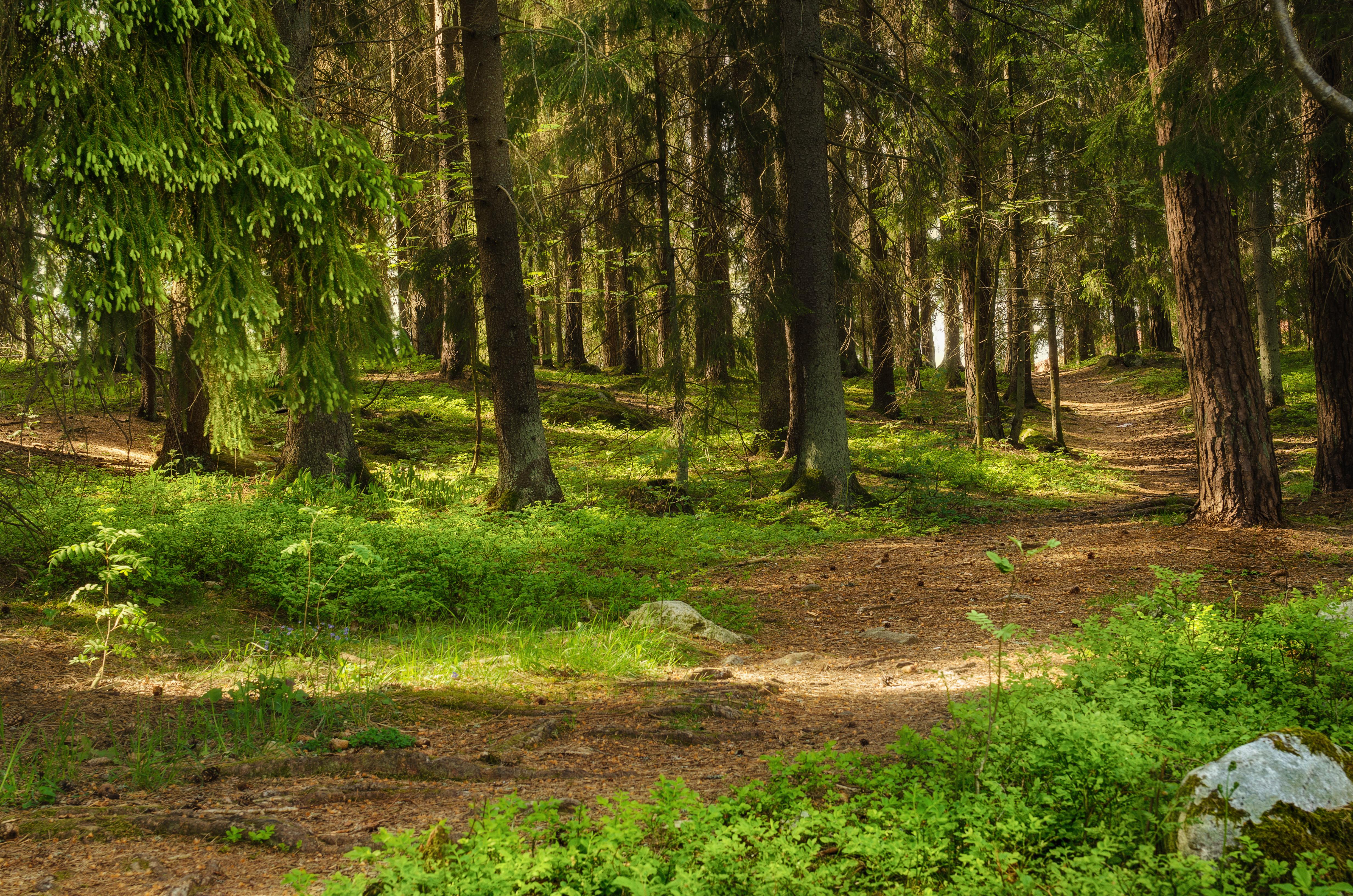 dc2f6e17 Priset på skogsmark når nya höjder - Skog Supply