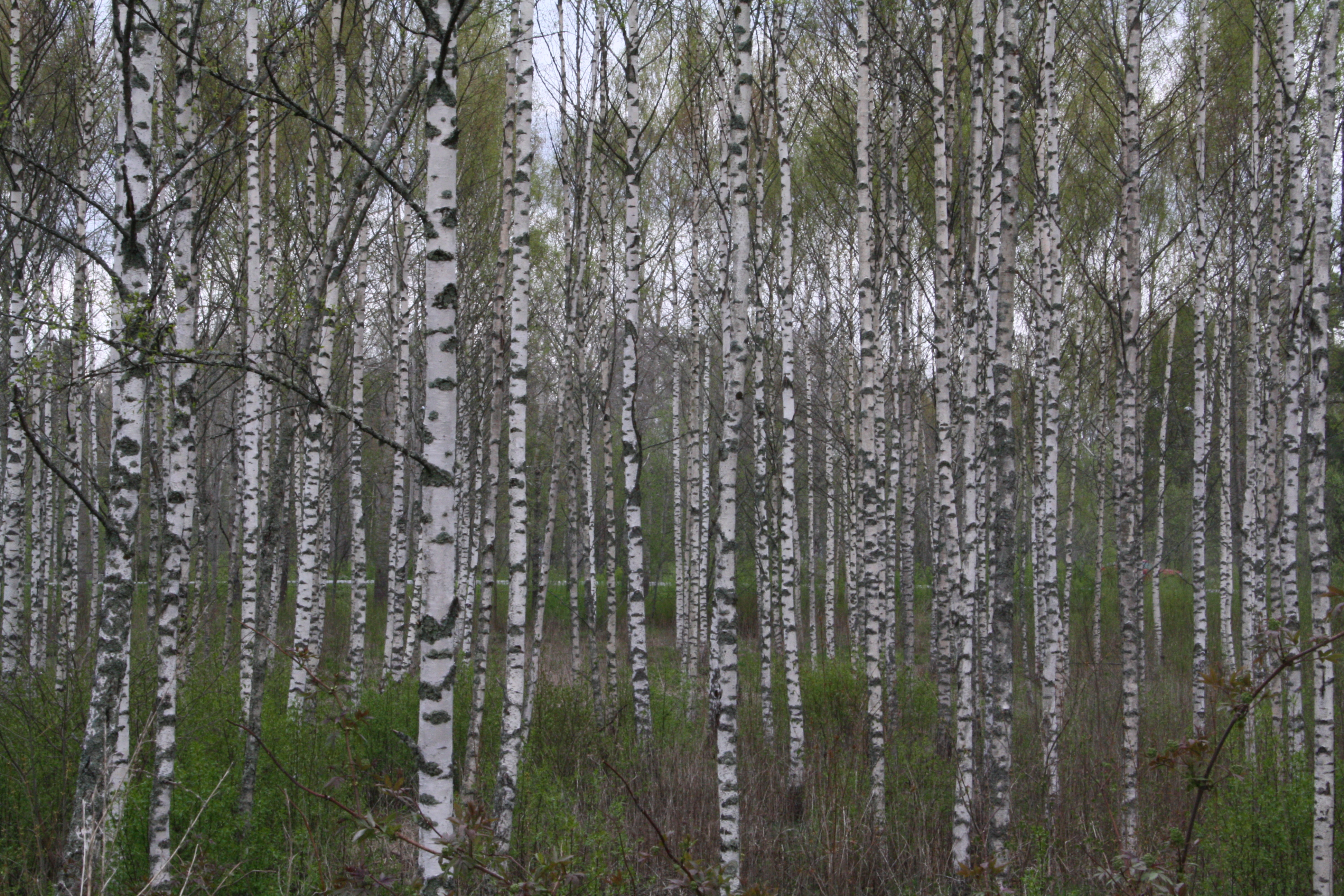 80590bc9 Mellanskog höjer priset på lövmassaved - Skog Supply