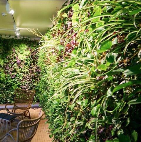 Nature Impact tilbyder professionel rådgivning til plantevægge