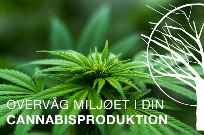 Overvåg din cannabisproduktion