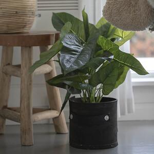 Kunstig Philodendron i potte. Potte af genbrugsgummi fra dæk