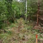 Naturen i mosen skånes ved brug af ScrewFast Skruepæle® fra Uretek