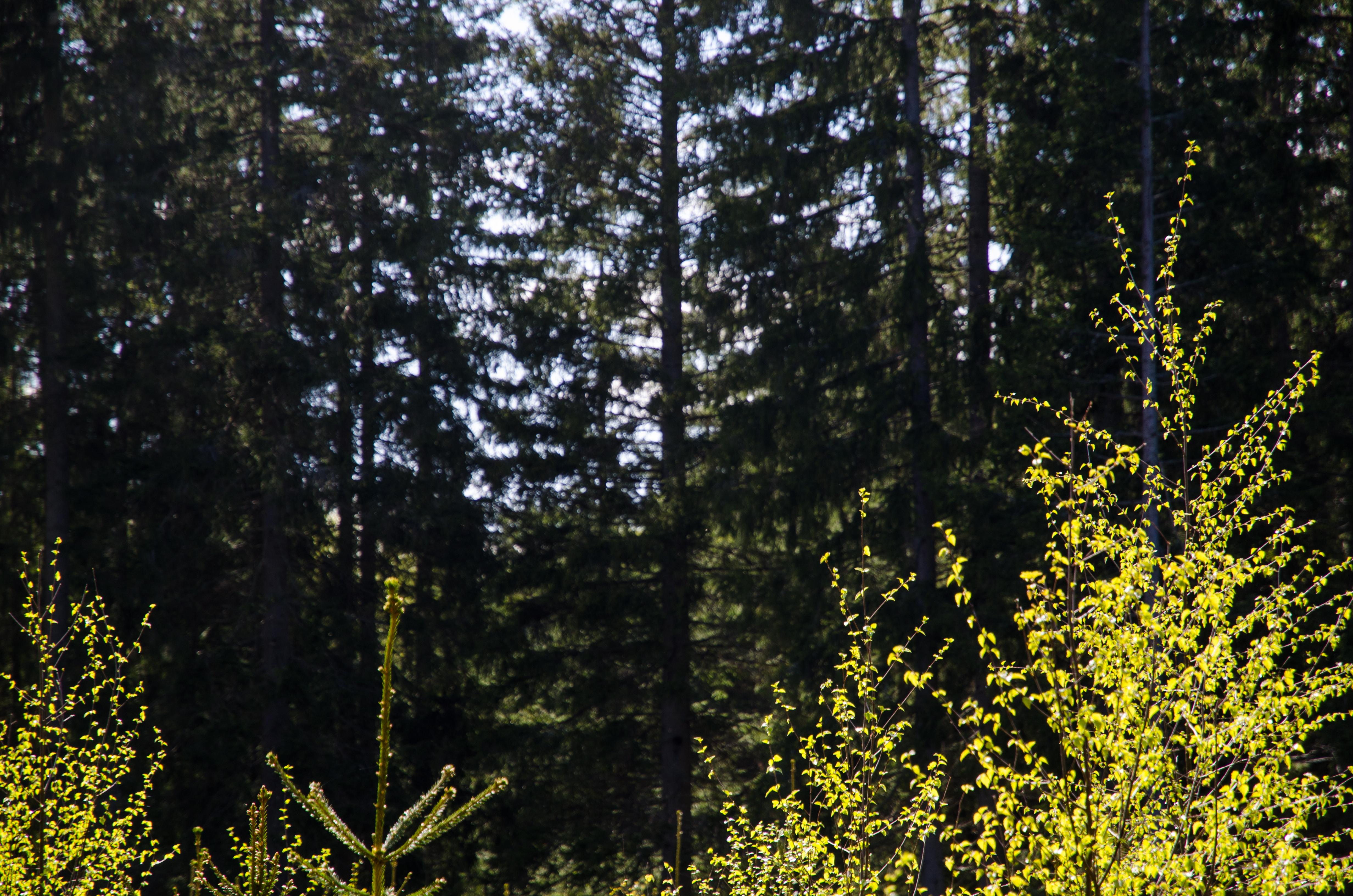 403bd0be SCA prishöjer - Skog Supply