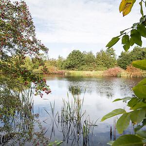 Park Alle_Brøndby_grøn_oase