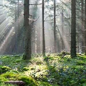 Troldtekt_Forest_300x200px