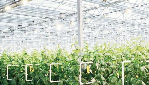 Enkla installationslösningar för växthus