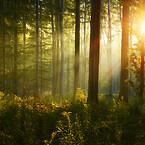 Swiss Wood Solution använder träd från certifierat hållbart skogsbruk i Europa med stort fokus på lokala skogar.