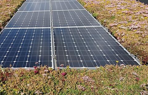 Solceller på grønt tag