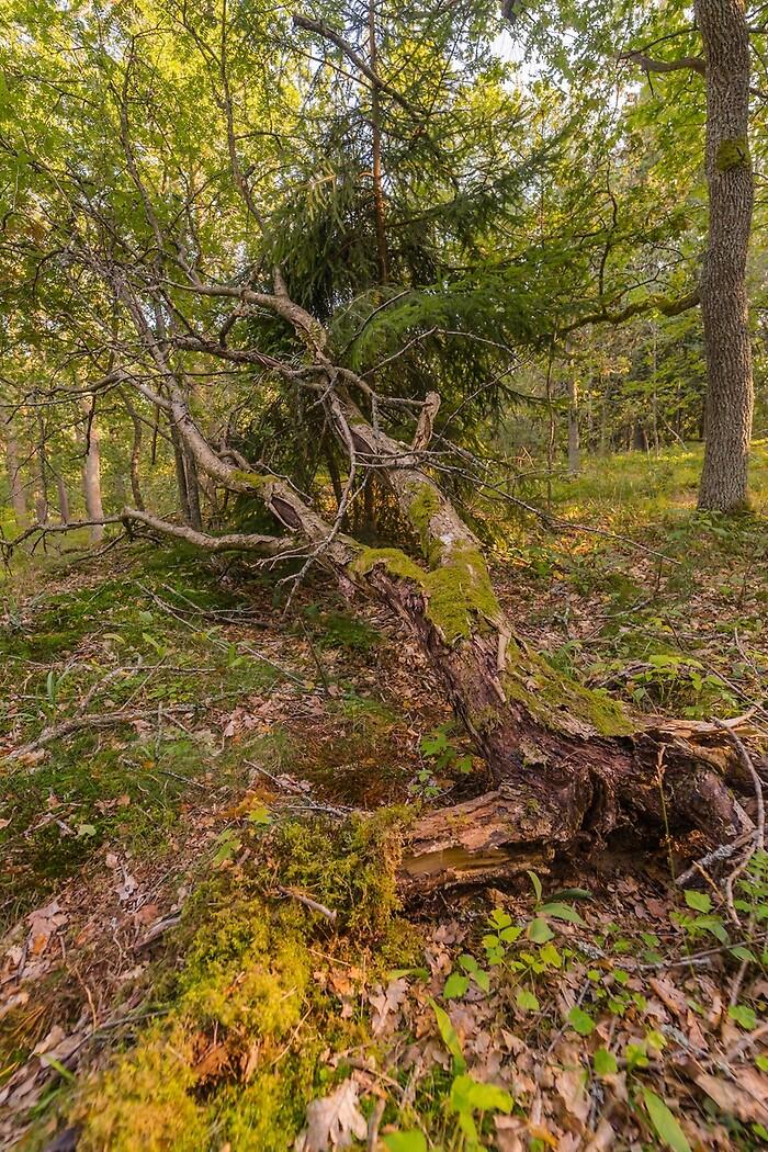 7ac4071b Inga stora skador efter stormen Knud - Skog Supply