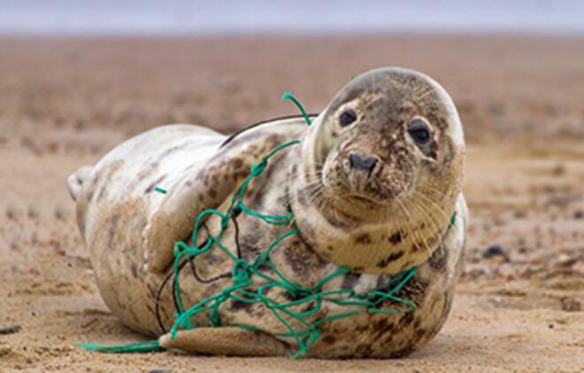 Du kan rädda djur i havet