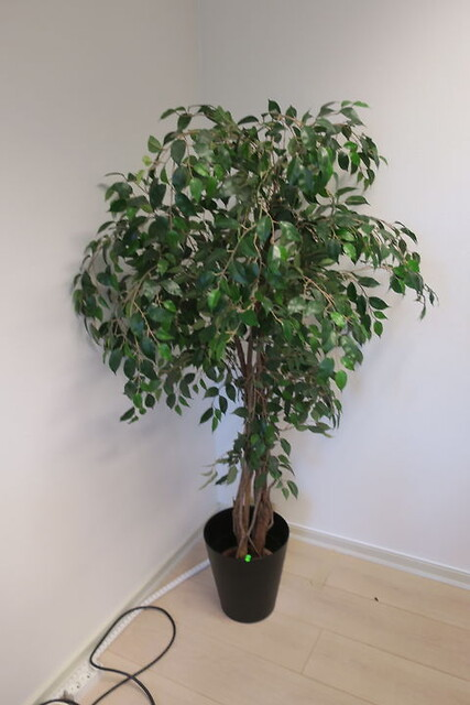 Plante i krukke