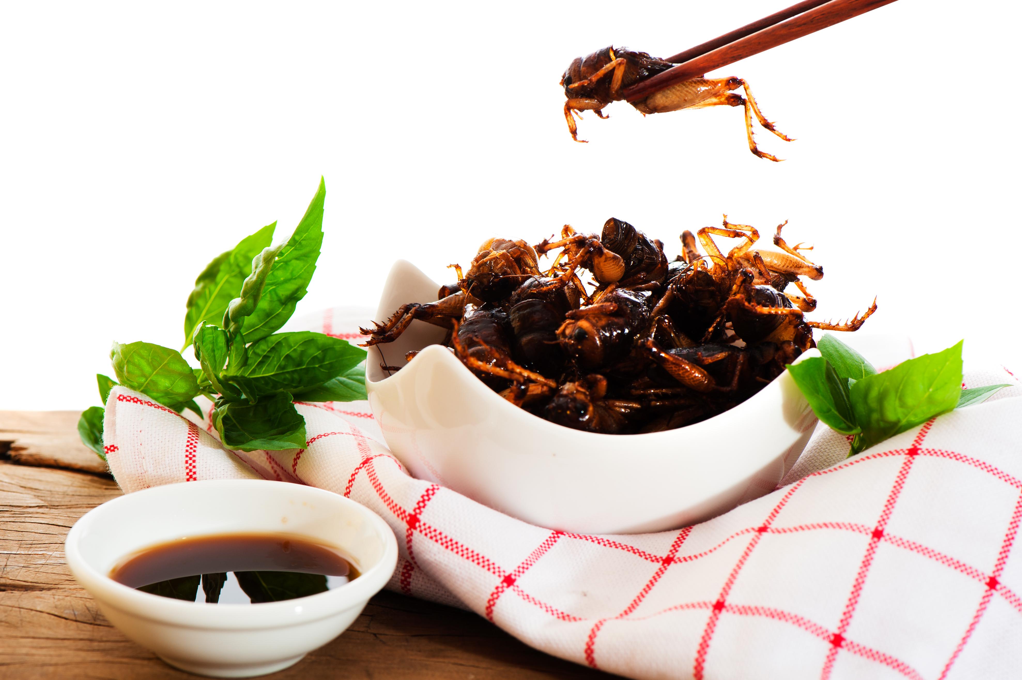 Insekter Som Mat Under Lupp Rs Amp Fastfood