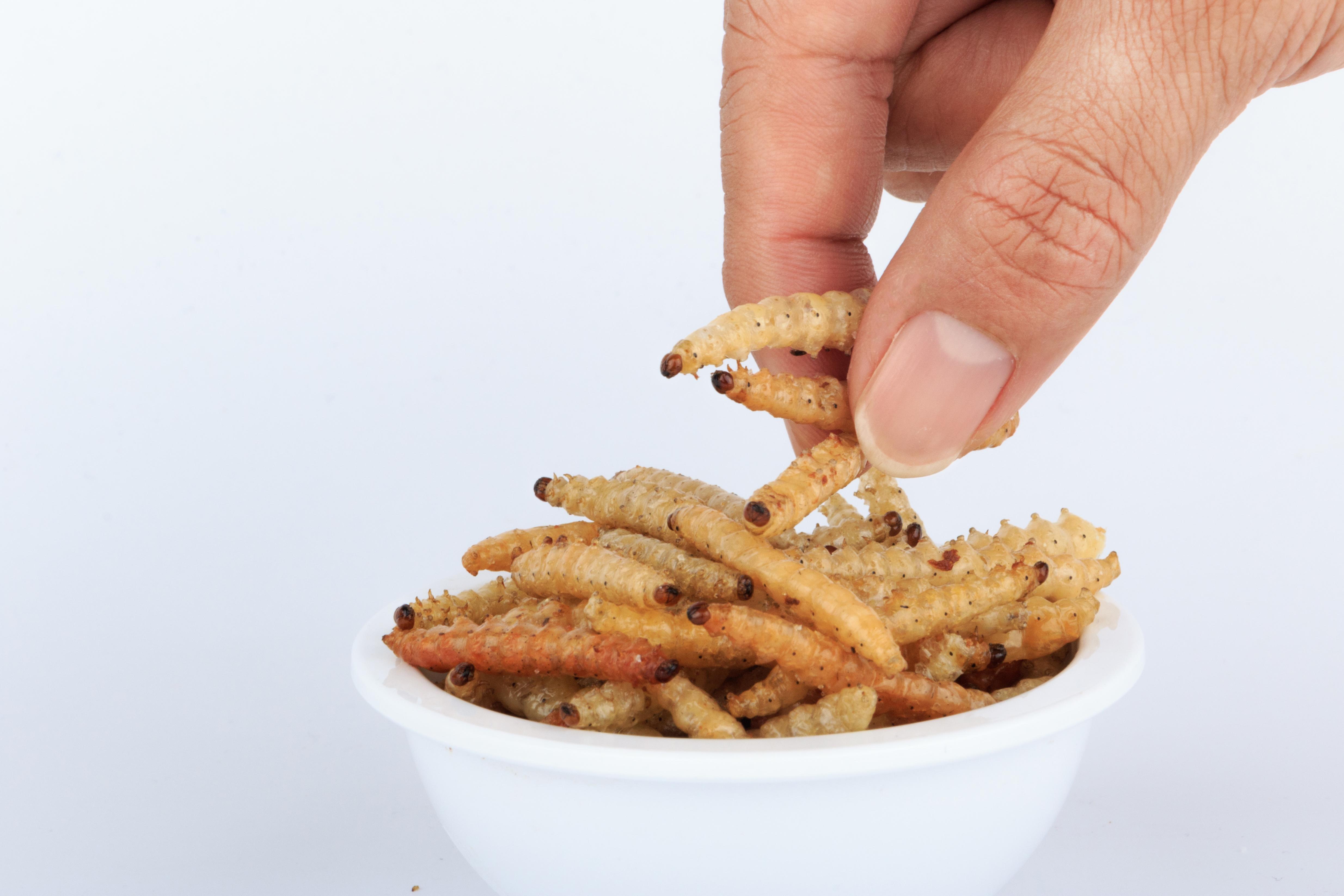 insekter i mat