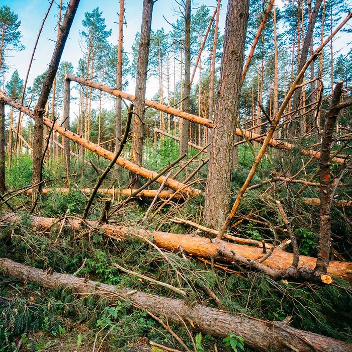 2f87bb0a Möjligt med konsekvensberäkning för stormfällning - Skog Supply