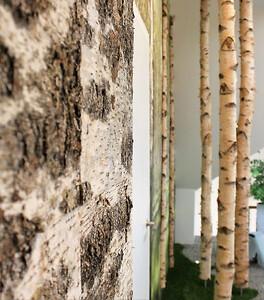 Birkestammer og birkebark til indretning og dekoration.