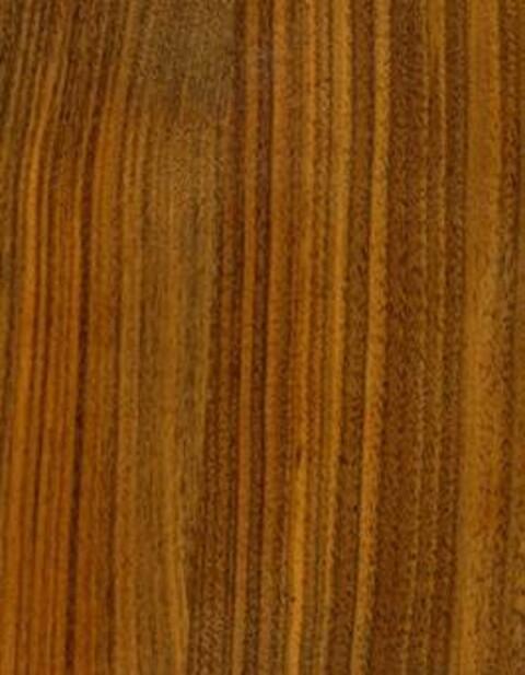 Amerikansk Valnød / Black Walnut (Juglans nigra)