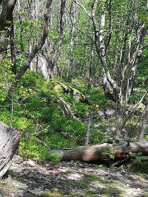ad498dbf Mellanskog justerar priset - Skog Supply