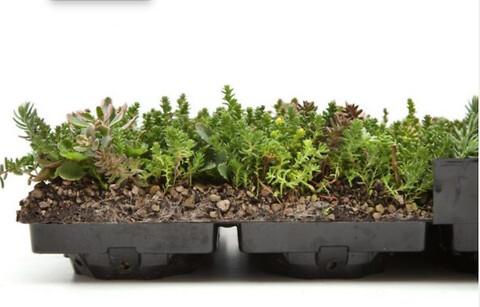Nature Impact tilbyder professionel rådgivning til ekstensive grønne tage