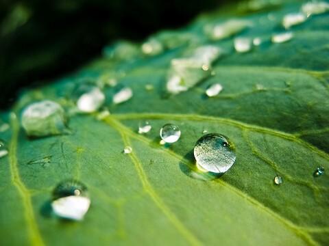 Miljøledelse - ISO 14001:2015 - Sådan anvender du standarden