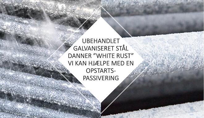 White Rust