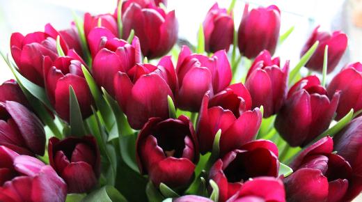 blomster føtex