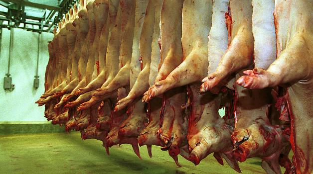 slagtning af svin