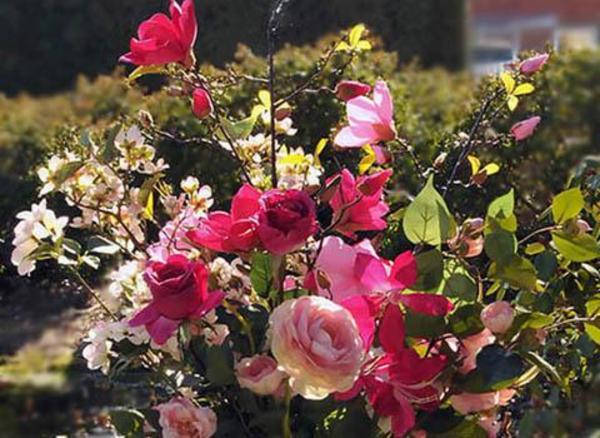 Kunstige Blomster kontakt Brøndsholm
